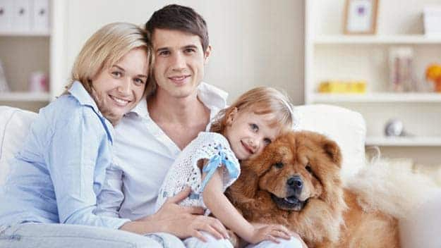 Wills & Trusts dog-young-family Direct Wills Perry